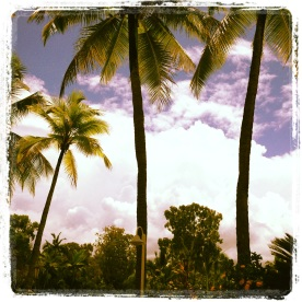 View in Port Douglas