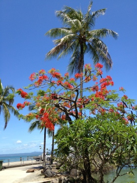 Beautiful nature in Port Douglas