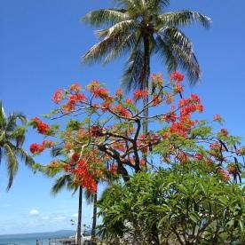 Beautiful nature in Port Douglas