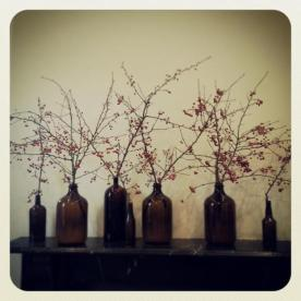 Hawthorne Berries at Miss Jackson