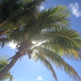 Palms on Mana Island, Fiji