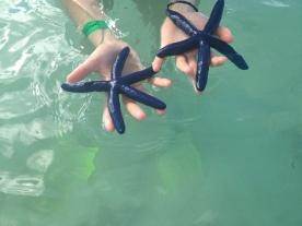 Blue starfish @ Mana Island