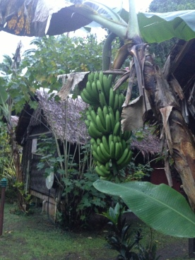 Bures and Bananas @ Mango Bay Resort, Coral Coast, Fiji