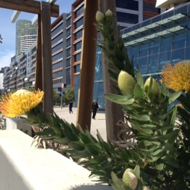Positive Monday - Ray of light on Flowers in the Docklands (Photo Credit: lavaleandherworld.wordpress.com)