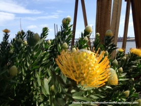 Positive Monday - Sunshine Flower in the Docklands (Photo Credit: lavaleandherworld.wordpress.com)