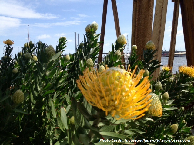 Positive Monday - Sunshine Flower in the Docklands (Photo Credit: lavaleandherworld.wordpress.com)