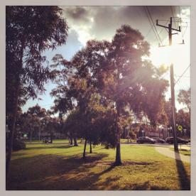 Eucalyptus sunlight (Photo credit: lavaleandherworld.wordpress.com)