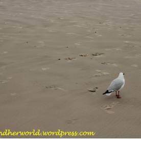 Seagull at the beach (Photo Credit: lavaleandherworld.wordpress.com)