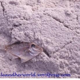 Fish skeleton, bay of Fires (Photo credit: lavaleandherworld.wordpress.com)