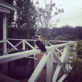 A real kookaburra at The Lake House (Photo credit: lavaleandherworld.wordpress.com)