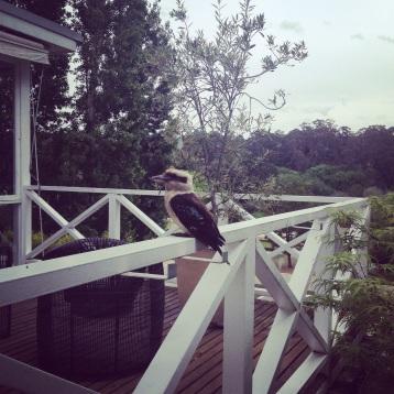 A real kookaburra at The Lake House (Photo credit: lavaleandherworld.wordpress.com)