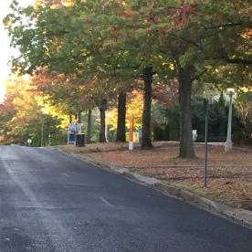 Fall in Canberra (Photo Credit: lavaleandherworld.wordpress.com)