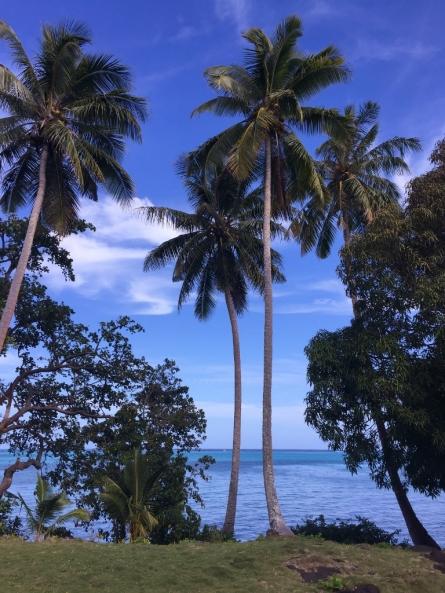 Palms in Samoa (Photo credit: lavaleandherworld.wordpress.com)