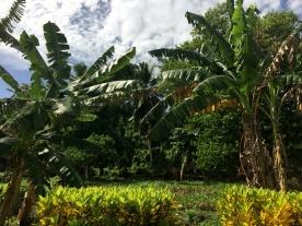 Nature in Samoa (Photo credit: lavaleandherworld.wordpress.com)