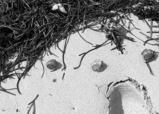 Tiny crabs on the beach in Samoa (Photo credit: lavaleandherworld.wordpress.com)
