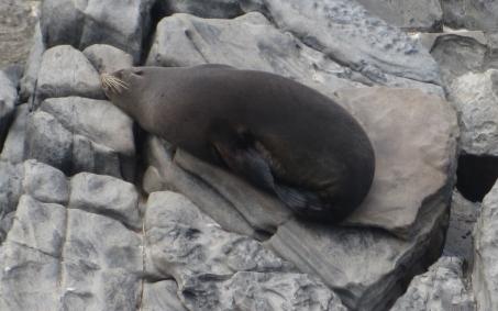 Sealions, Kangaroo island (Photo credit: http://www.lavaleandherworld.wordpress.com)