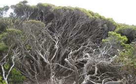 Nature on Kangaroo island (Photo credit: http://www.lavaleandherworld.wordpress.com)