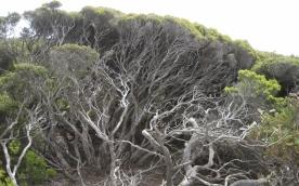 Nature on Kangaroo island (Photo credit: http://www.lavaleandherworld.wordpress.com)
