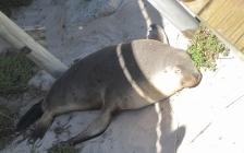 Seals beach, Kangaroo island (Photo credit: http://www.lavaleandherworld.wordpress.com)