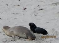 Mother & son, Seals beach, Kangaroo island (Photo credit: http://www.lavaleandherworld.wordpress.com)
