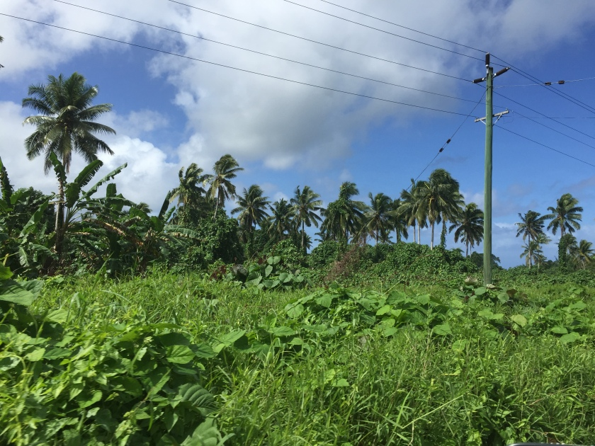 Samoan vegetation (Photo credit: https://lavaleandherworld.wordpress.com)