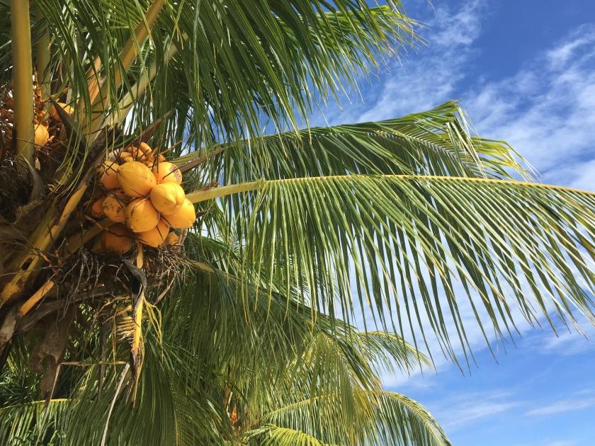 Nature, Samoa (Photo credit: https://lavaleandherworld.wordpress.com)